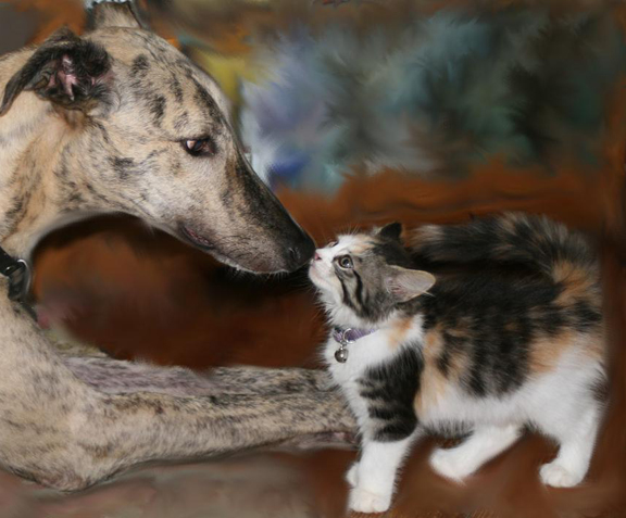 Introducing Your Dog to Cats