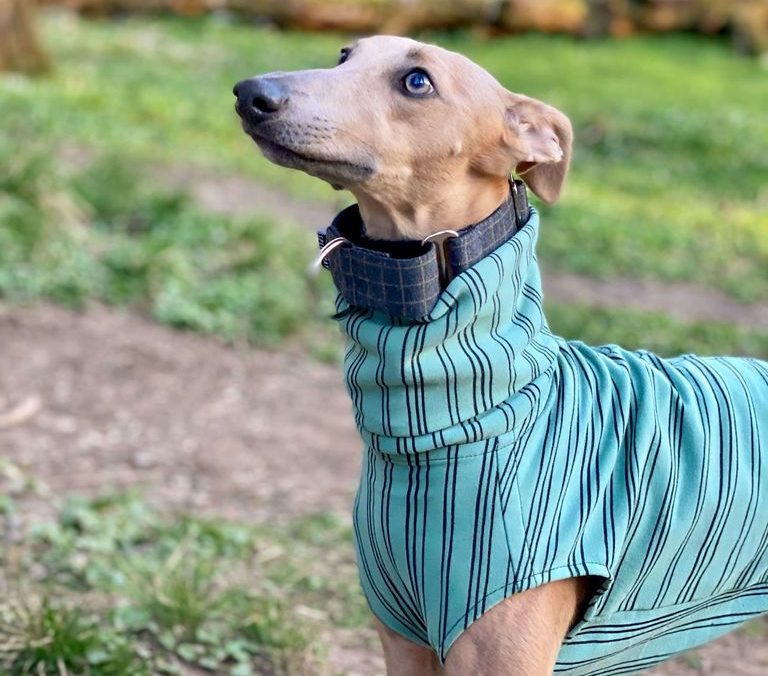 Speedray Sighthound Design Wear